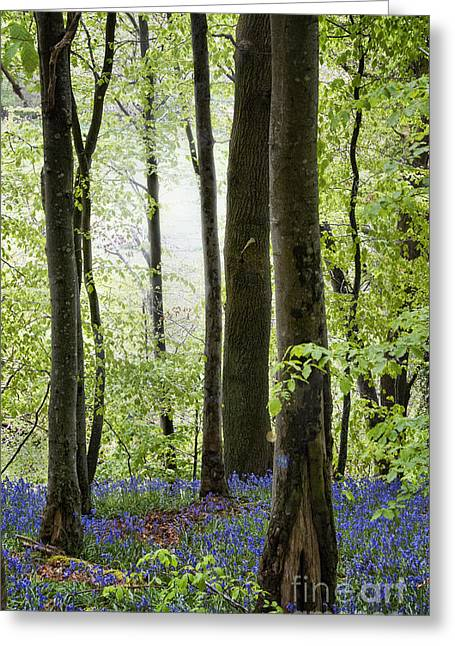Bluebells Greeting Cards - Bluebells in the Woods Greeting Card by Juli Scalzi