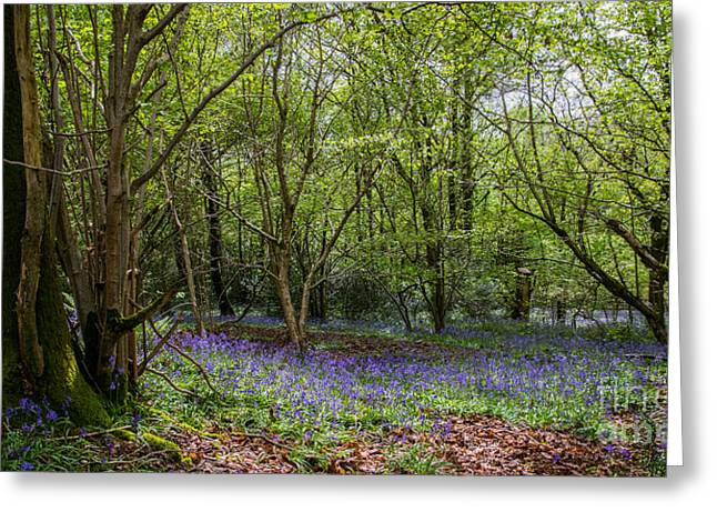 John Collier Greeting Cards - Bluebells Greeting Card by John Collier