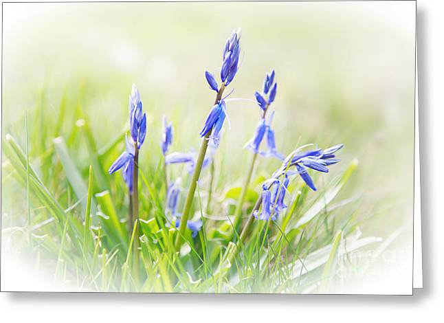 Snug Digital Greeting Cards - Bluebells on the Forest Greeting Card by Natalie Kinnear