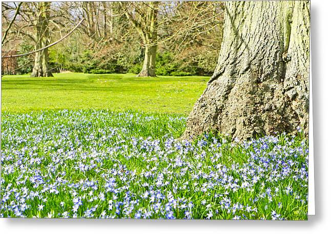 Fresh Green Greeting Cards - Bluebells Greeting Card by Tom Gowanlock