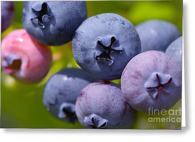 Ripening Fruit Greeting Cards - Blueberries Greeting Card by Sharon  Talson