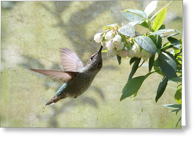 Hovering Greeting Cards - Blueberry Blossom Dessert Greeting Card by Angie Vogel
