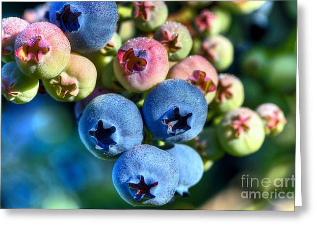 Ripening Fruit Greeting Cards - Blueberry Dew Greeting Card by Sharon  Talson