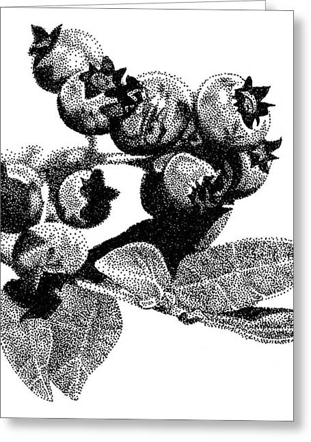 Blueberry Drawings Greeting Cards - Blueberry Greeting Card by Rob Christensen