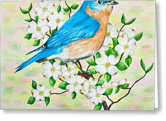 Drawing Color Pencils Drawings Greeting Cards - Bluebird and Dogwood Greeting Card by Lena Auxier