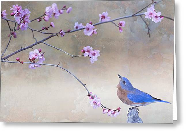 Eastern Bluebird Greeting Cards - Bluebird and Plum Blossoms Greeting Card by Bonnie Barry