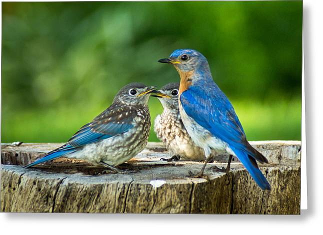 Bluebird Greeting Cards - Bluebird - Father and Sons Greeting Card by Bill Pevlor