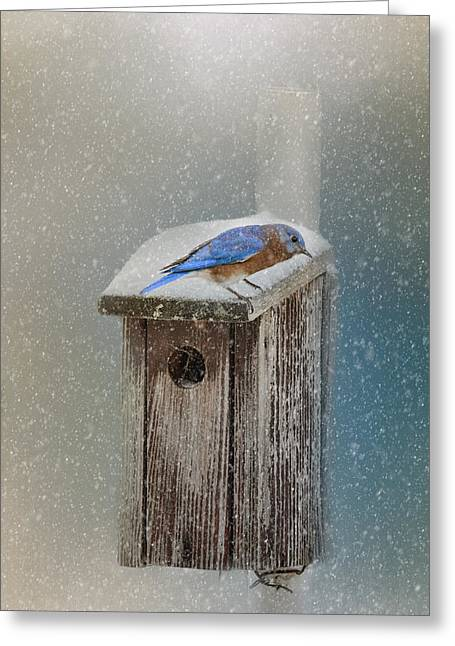 Blizzard New York Greeting Cards - Bluebird In A Blizzard Greeting Card by Jai Johnson