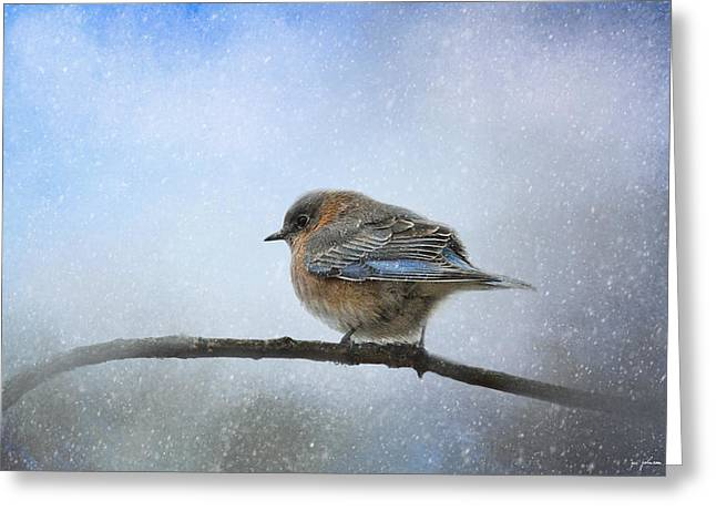 Birds In Winters Greeting Cards - Bluebird In The Snow Greeting Card by Jai Johnson