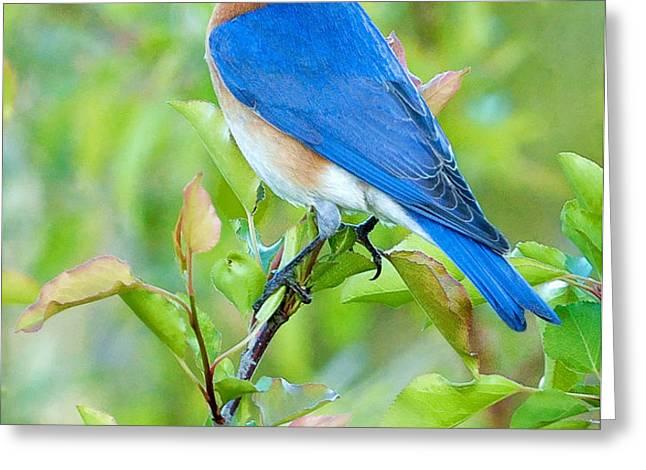 Bluebird Joy Greeting Card by William Jobes