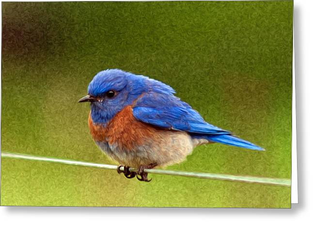 Passeriformes Greeting Cards - BlueBird  Painting Greeting Card by Jean Noren