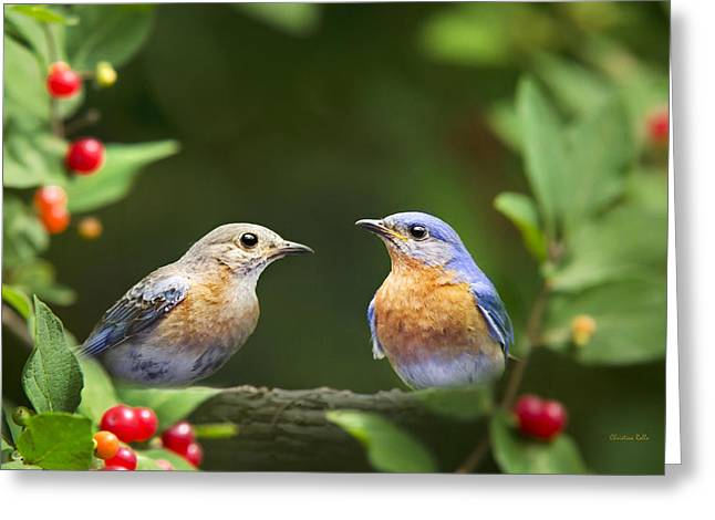 Bluebird Greeting Cards - Bluebird Pair Greeting Card by Christina Rollo
