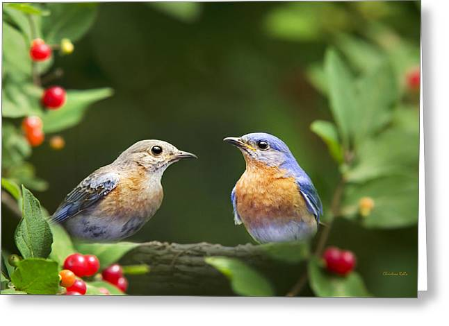 Animals Love Greeting Cards - Bluebird Pair Greeting Card by Christina Rollo