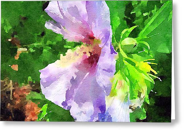 Pacificnorthwest Greeting Cards - Bluebird Rose Of Sharon Greeting Card by Anna Porter