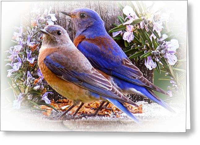 Turdidae Greeting Cards - Bluebird Wedding Greeting Card by Jean Noren