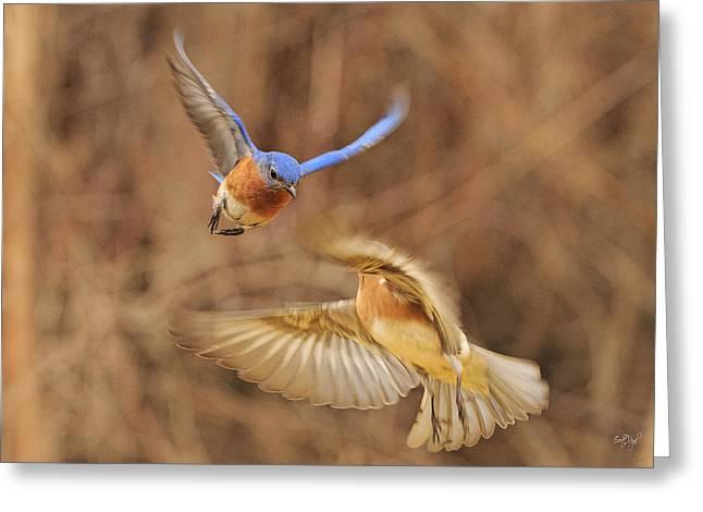 Bluebirds Greeting Cards - Bluebirds Aerial Art Greeting Card by Everet Regal