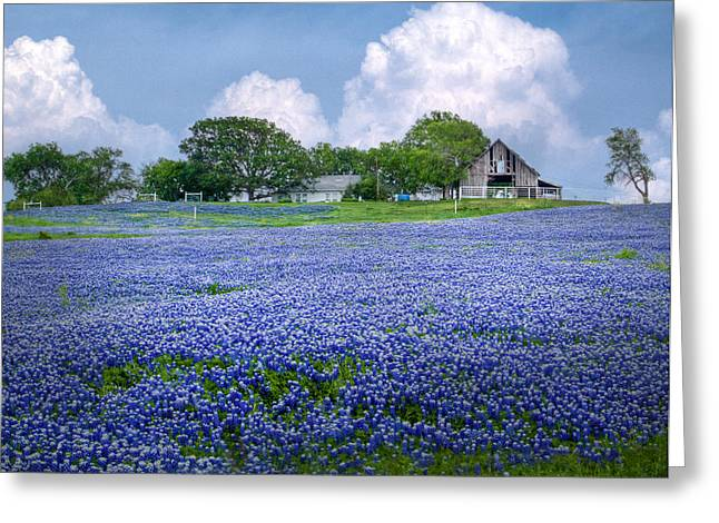 Blue Flowers Greeting Cards - Bluebonnet Farm Greeting Card by David and Carol Kelly