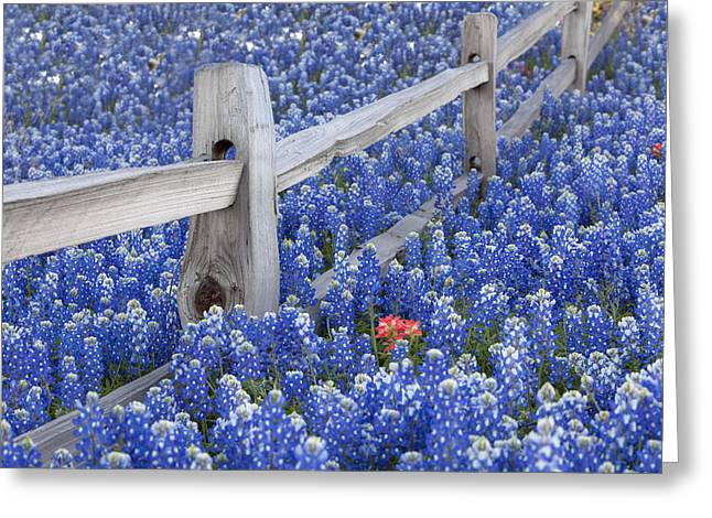 Blue Bonnets Greeting Cards - Bluebonnet Fencepost in the Texas Hill Country Greeting Card by Rob Greebon