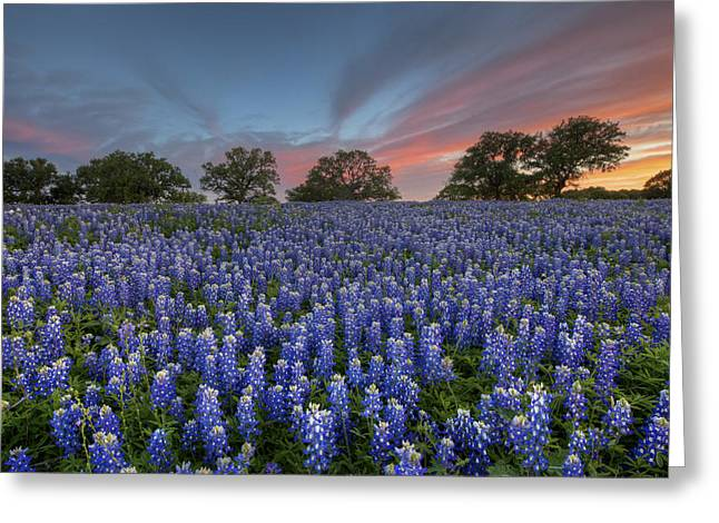 Bluebonnet Field Of Glory Greeting Card by Rob Greebon