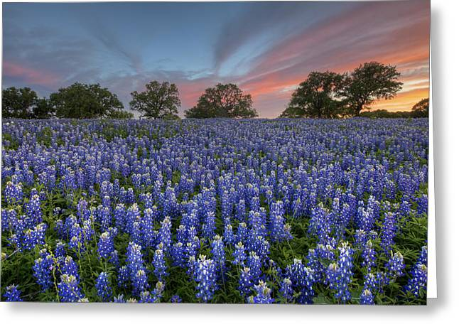 Wildflower Photos Greeting Cards - Bluebonnet Field of Glory San Saba County Texas Greeting Card by Rob Greebon