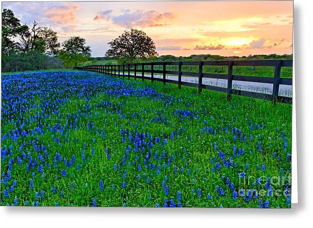 """sunset Photography"" Greeting Cards - Bluebonnet Fields Forever Brenham Texas Greeting Card by Silvio Ligutti"