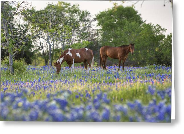 Wildfowers Greeting Cards - Bluebonnet images - Horses in in a Field of Bluebonnets in Ennis Greeting Card by Rob Greebon