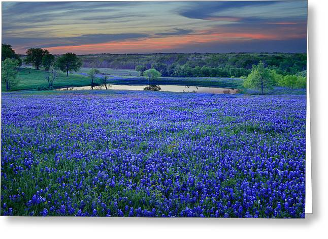 Texas Wild Flowers Greeting Cards - Bluebonnet Lake Vista Texas Sunset - Wildflowers landscape flowers pond Greeting Card by Jon Holiday