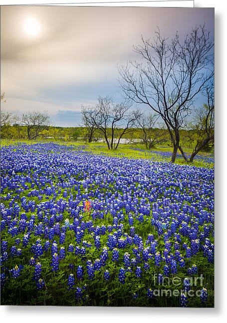 Pasture Scenes Greeting Cards - Bluebonnet Mood Greeting Card by Inge Johnsson