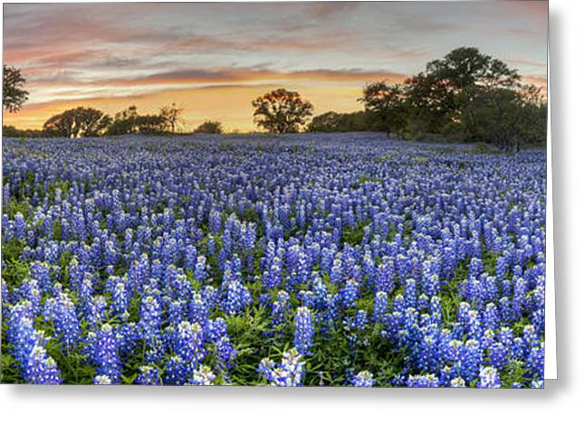 Wildflower Photos Greeting Cards - Bluebonnet Panorama from San Saba County at Sunset Greeting Card by Rob Greebon