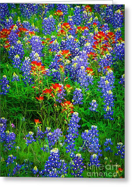 Llano Greeting Cards - Bluebonnet Patch Greeting Card by Inge Johnsson