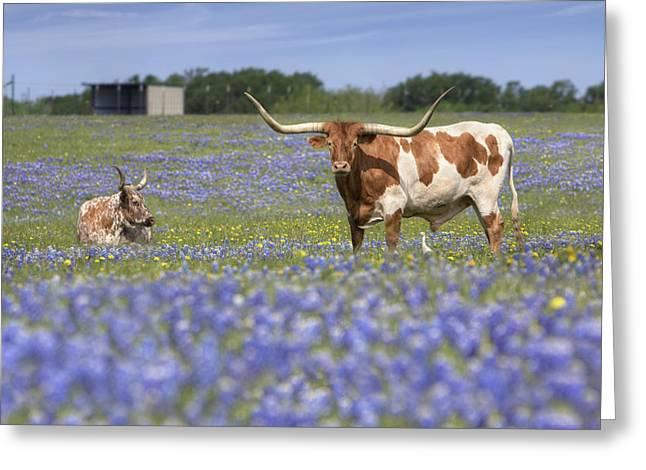 Texas Longhorn In Bluebonnets Greeting Cards - Bluebonnet Pictures - Longhorns in Bluebonnets 5 Greeting Card by Rob Greebon