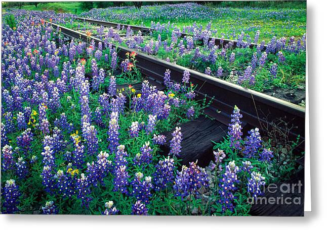 Llano Greeting Cards - Bluebonnet Rails Greeting Card by Inge Johnsson