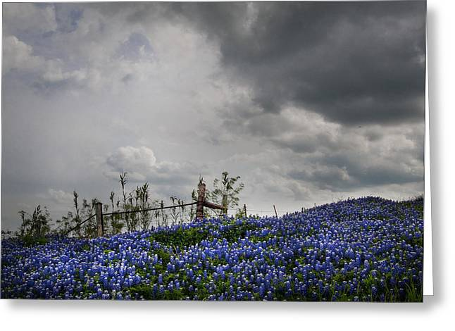 Lanscape Greeting Cards - Bluebonnet Rain Storm Greeting Card by David and Carol Kelly