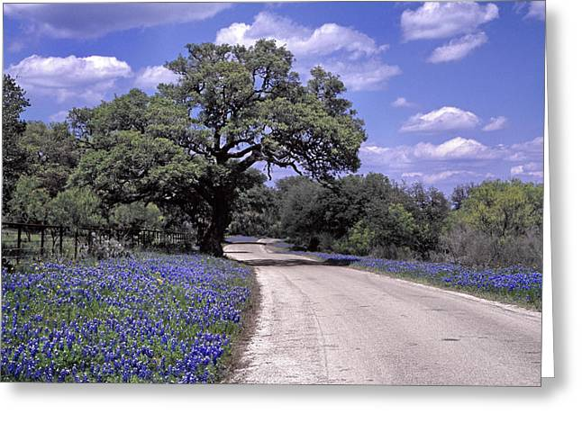 Lanscape Greeting Cards - Bluebonnet Road Greeting Card by David and Carol Kelly