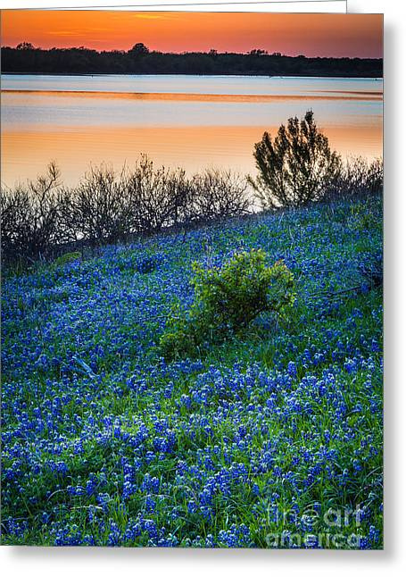 Grapevine Lake Bluebonnets Greeting Card by Inge Johnsson