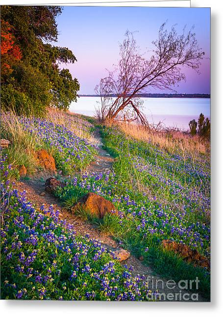 Grapevine Photographs Greeting Cards - Bluebonnet Trail Greeting Card by Inge Johnsson