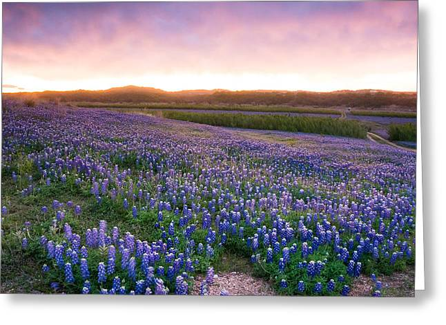 Texas Bluebonnet Greeting Cards - Bluebonnets after the Storm - wildflower field in Texas Greeting Card by Ellie Teramoto