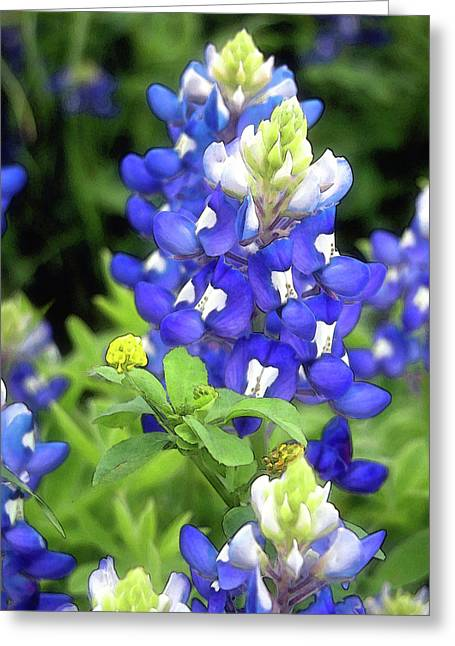 Bluebonnets Blooming Greeting Card by Stephen Anderson