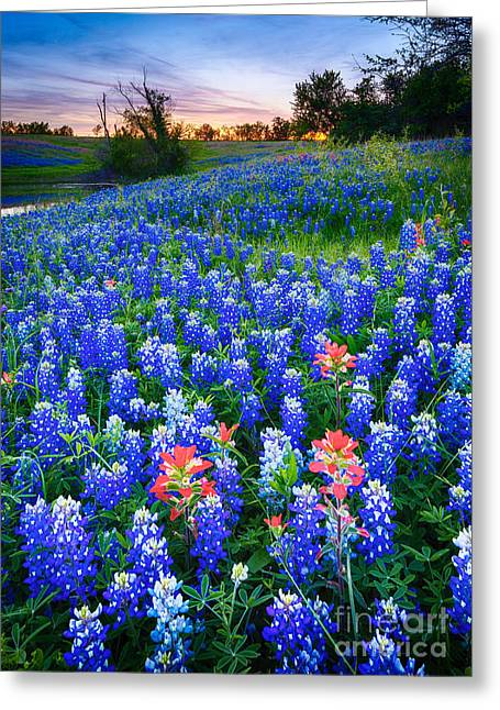 Pasture Scenes Photographs Greeting Cards - Bluebonnets Forever Greeting Card by Inge Johnsson