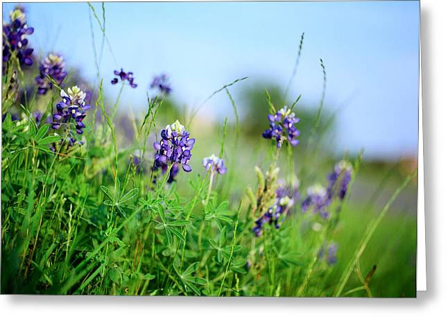 Bluebonnet Scene Greeting Cards - Bluebonnets of Texas Greeting Card by Linda Unger