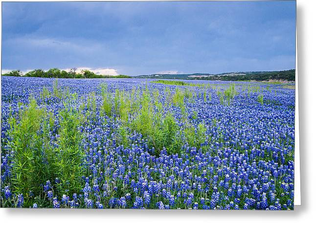 Texas Landscape Greeting Cards - Bluebonnets under the Storm Clouds - wildflower field Greeting Card by Ellie Teramoto