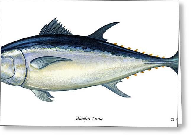 Bluefin Tuna Greeting Card by Charles Harden