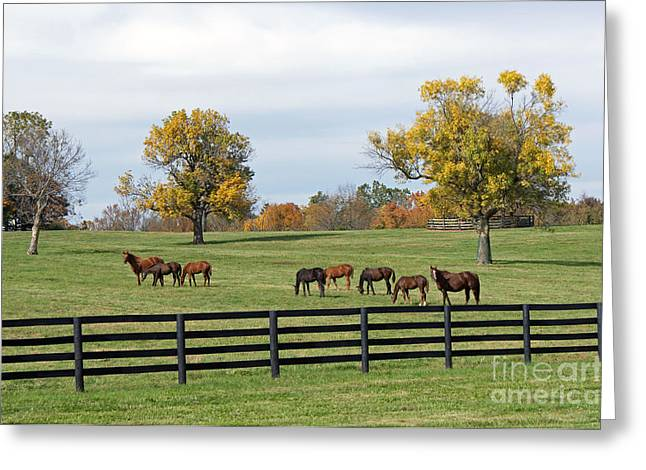 Bluegrass Autumn Greeting Card by Roger Potts