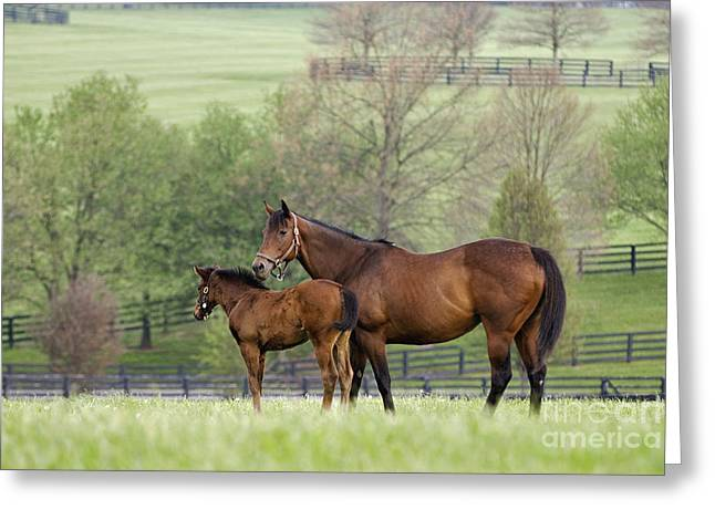 Alert Bay Greeting Cards - Bluegrass Family - D002766 Greeting Card by Daniel Dempster