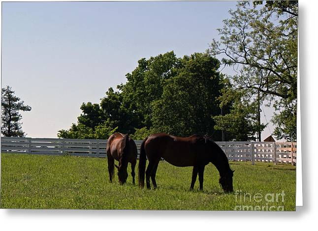 Keeneland Paintings Greeting Cards - Bluegrass Summer Day Greeting Card by Roger Potts