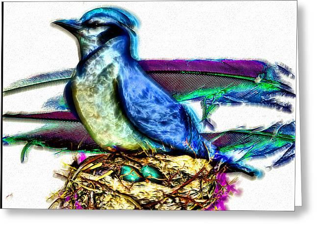 Jaybird Greeting Cards - Bluejay Nesting Greeting Card by Daniel Janda