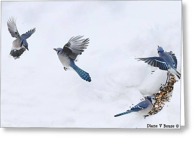 Blue Jay Images Greeting Cards - Blue Jays Forming a Line Greeting Card by Diane V Bouse