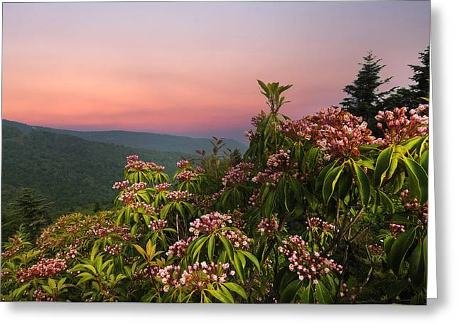 Randall Branham Greeting Cards - Blueridge Parkway Mountain Laurel Greeting Card by Randall Branham