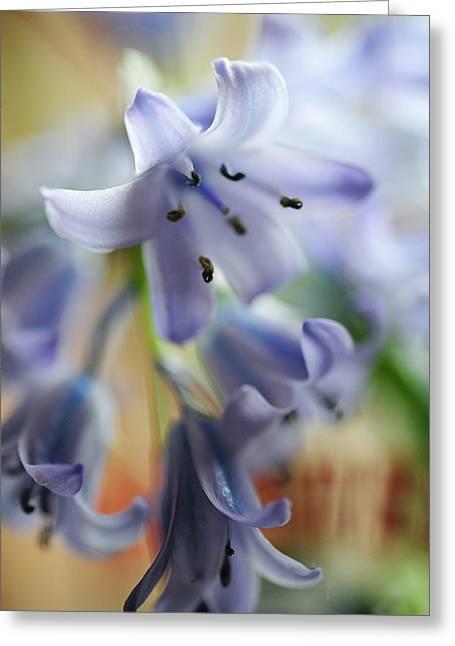 Blues.the Wild Hyacinth Greeting Card by Jenny Rainbow