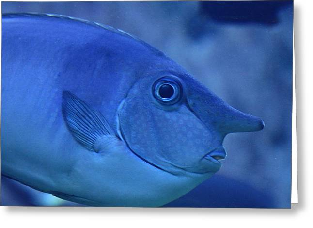 Surgeonfish Greeting Cards - Bluespine Unicorn fish Greeting Card by Karon Melillo DeVega